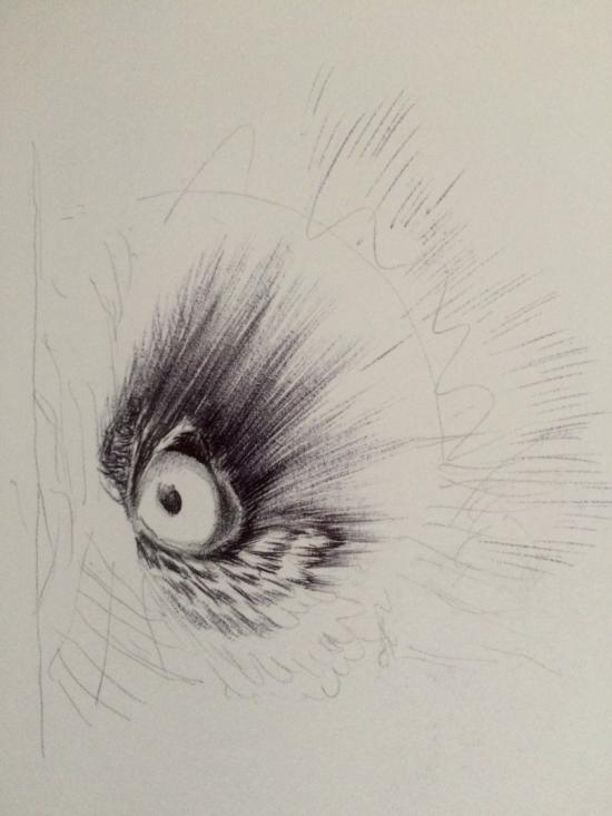 Owl's eye wip