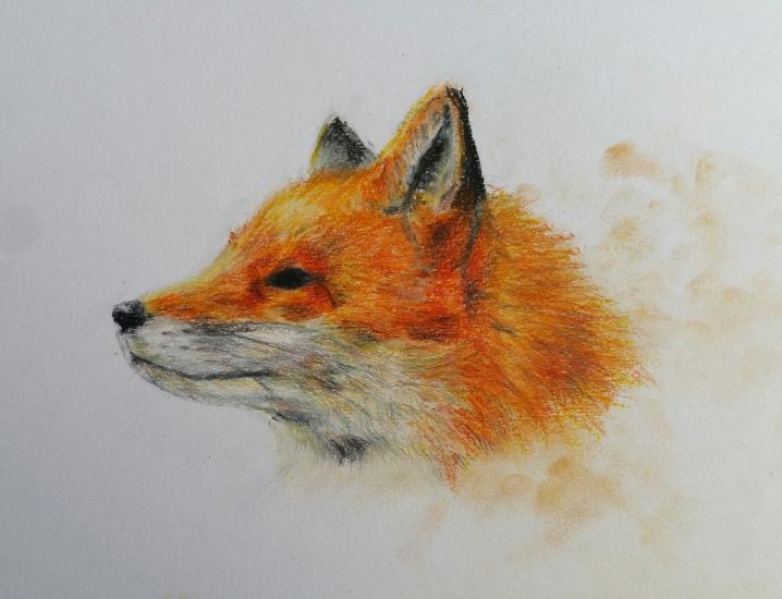 Quick Fox Pastel Crayon Drawing
