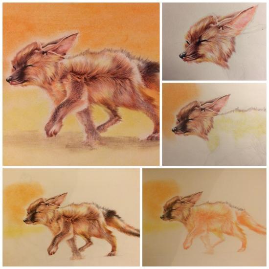 Progression of My fennec fox