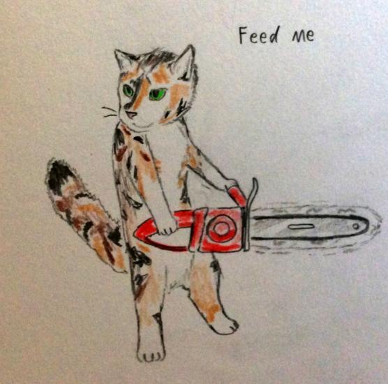 Cat: feed me