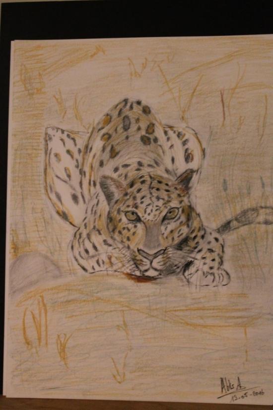 drawing A3 Panthera pardus
