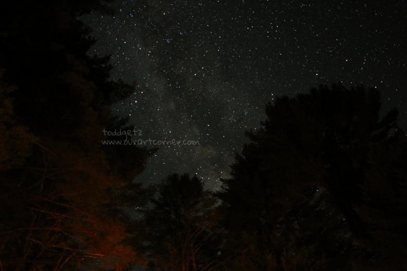 Milky Way Through The Trees