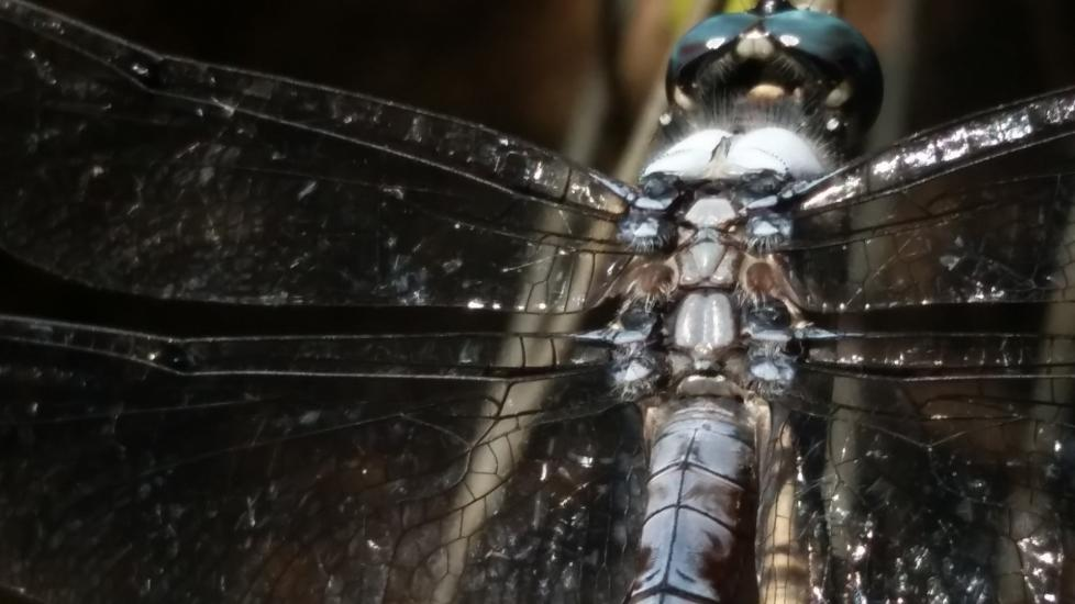 Dragonfly Ready for Takeoff