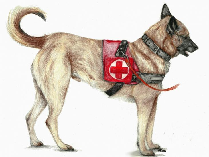 First Aid working dog 2