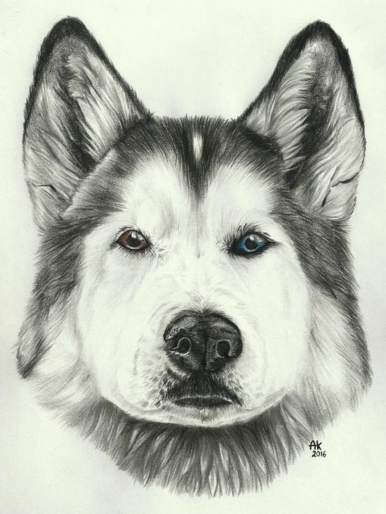 Loki Wolf Dog