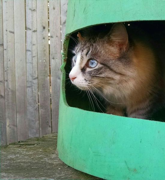 Skye In A Barrel