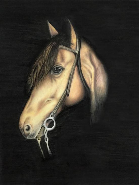 Realistic horse portrait