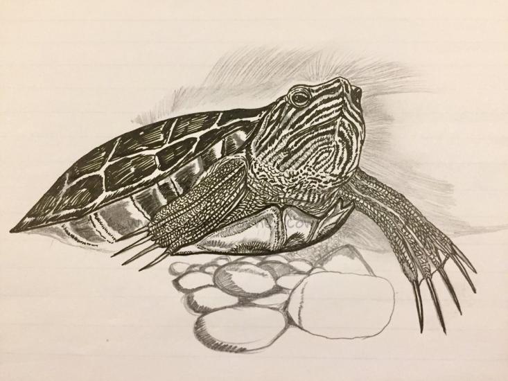 WIP - Turtle Drawing