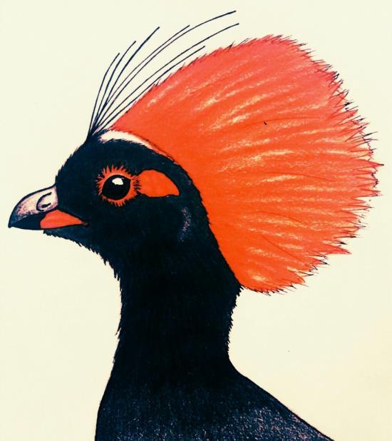 Crested Patridge 2