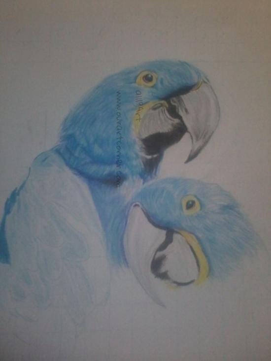 a couple of bird