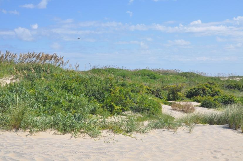 The Dunes Of Protection