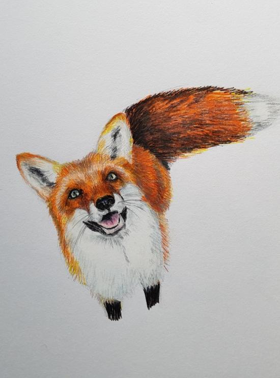 Fox (work in progress)