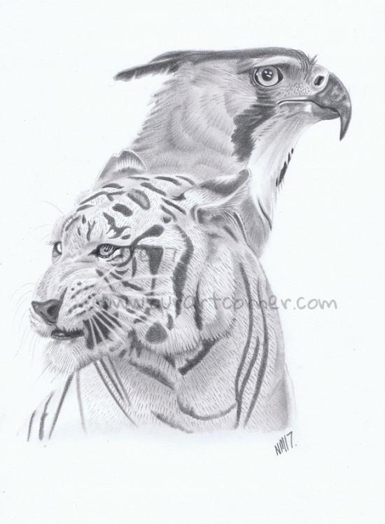 Tiger and Ornate Hawk Eagle