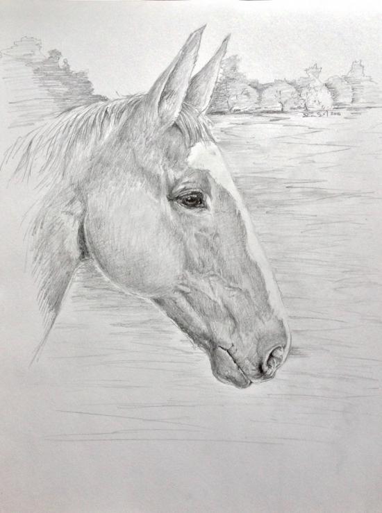 Poni , Gillian's horse