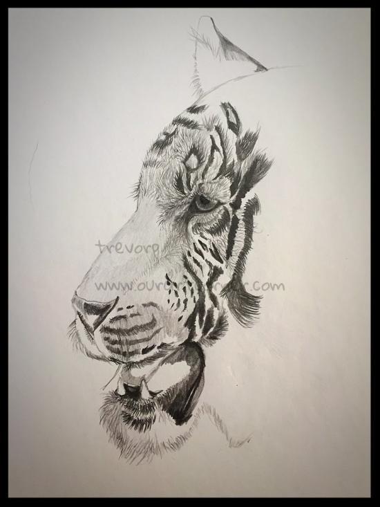 Bengal Tiger - WIP