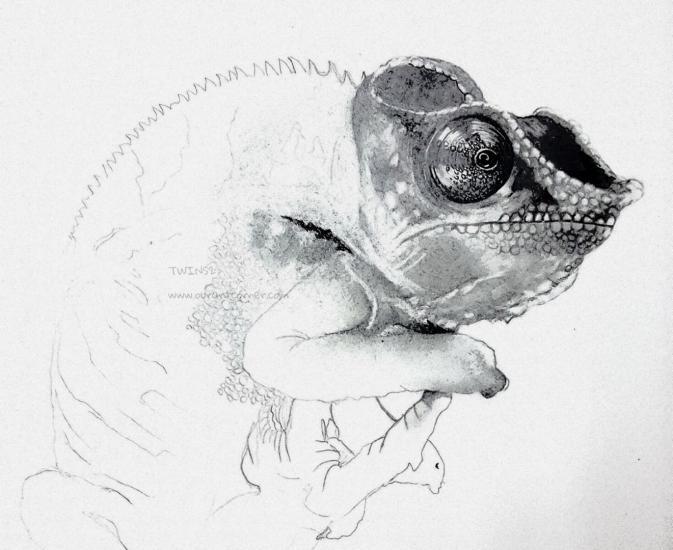 W.I.P. Chameleon