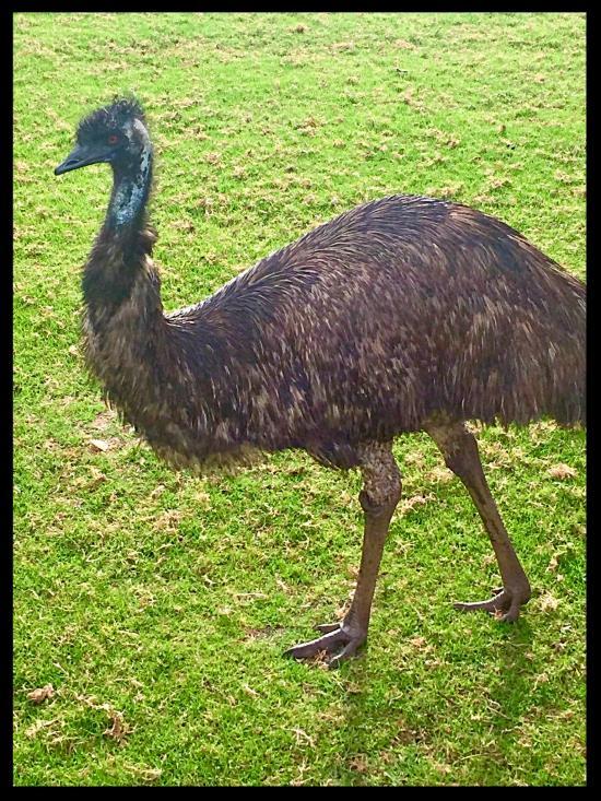 EMU - UP CLOSE