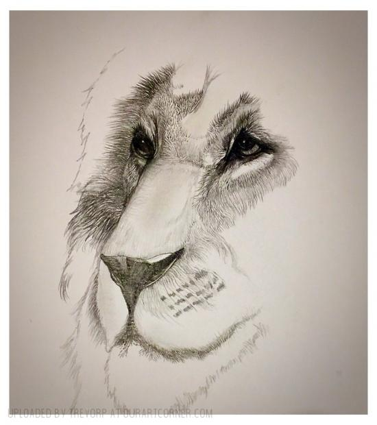 LION DRAWING - WIP