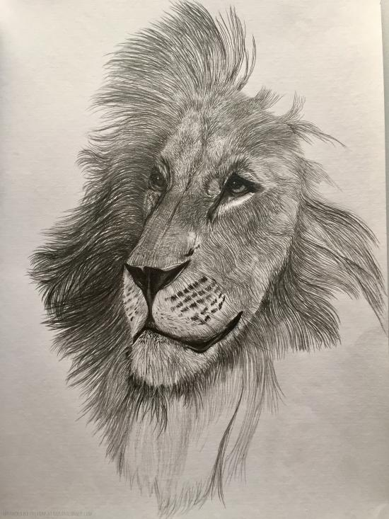 Final Stages - Lion WIP