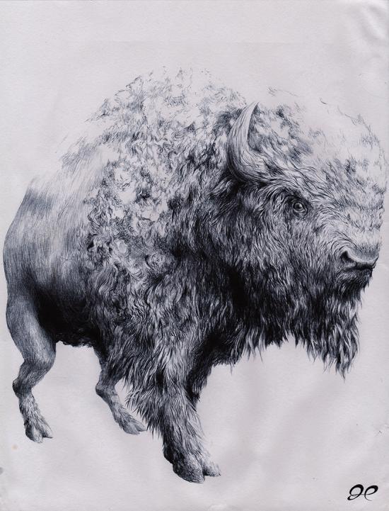 just a bison