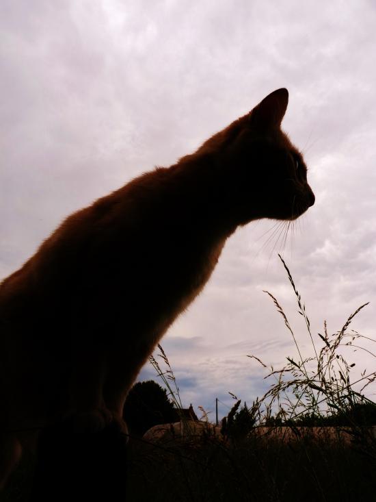 Cat against the light