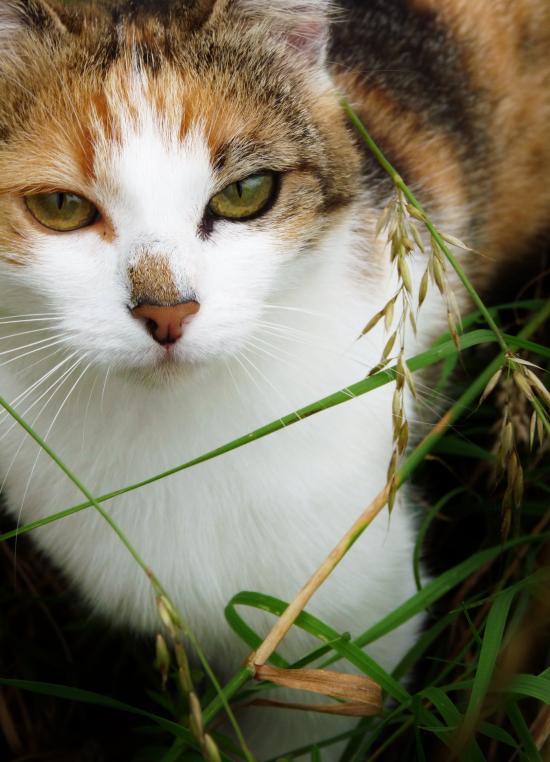 Cat tortoiseshell