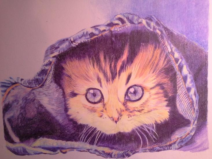 kitten in levis