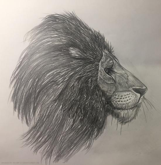 Reworked Lion Drawing