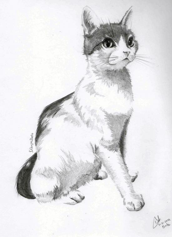 Cat - Revis