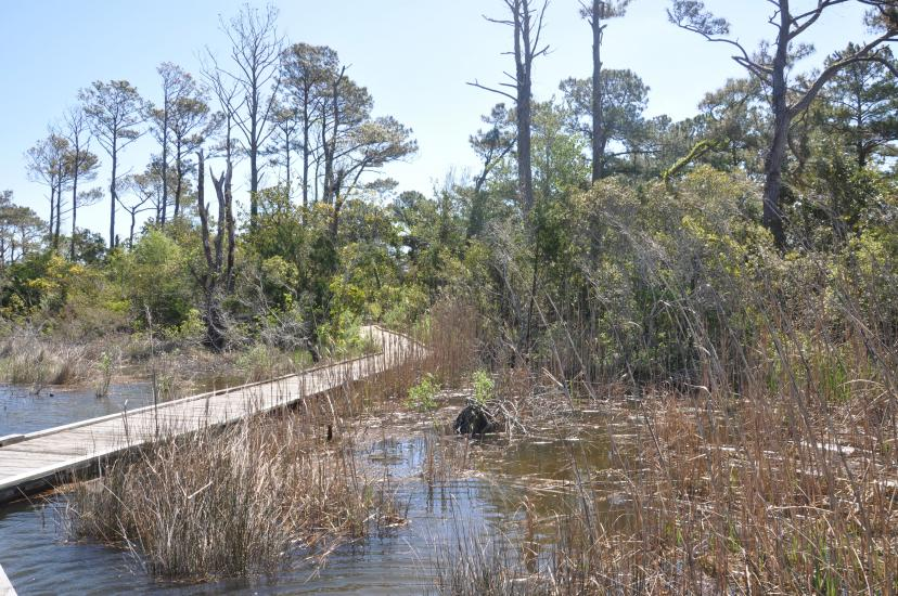 Into The Wetlands