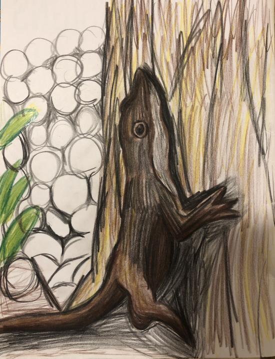Green Anole (Carolina Anole) Drawing
