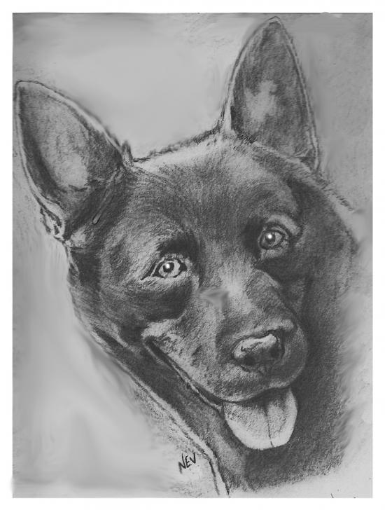 leaddog not reddog
