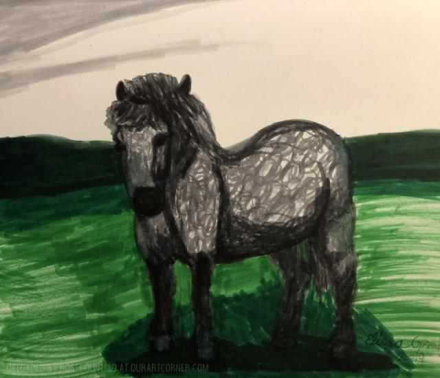 Grey Dapple Dartmoor Pony