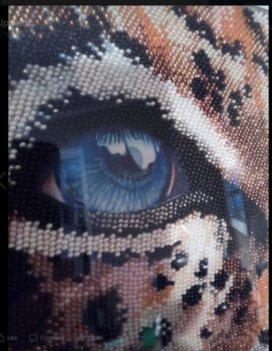 Blue Eye Leopard Part 2 Close up