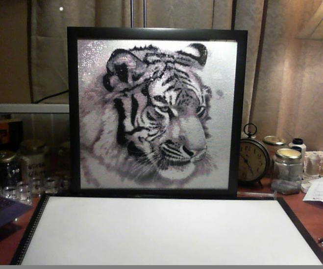 Myan (tiger)
