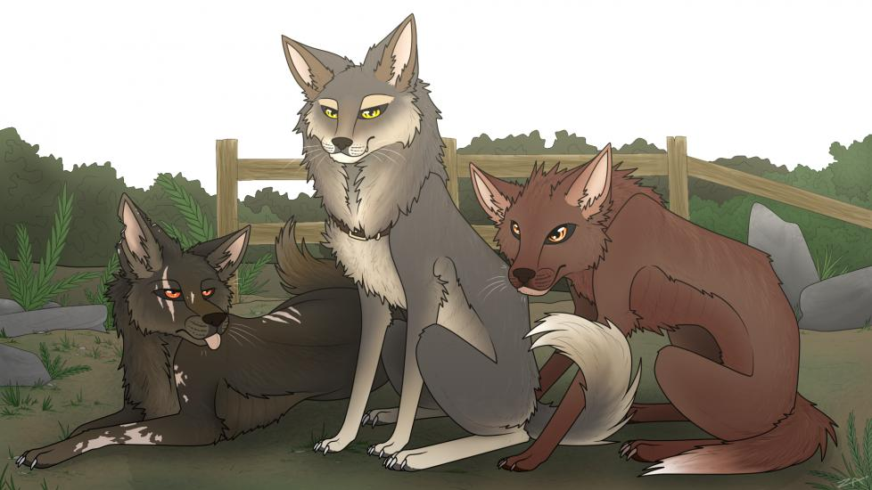 Wolves- Flea, Destiny, and Lucy