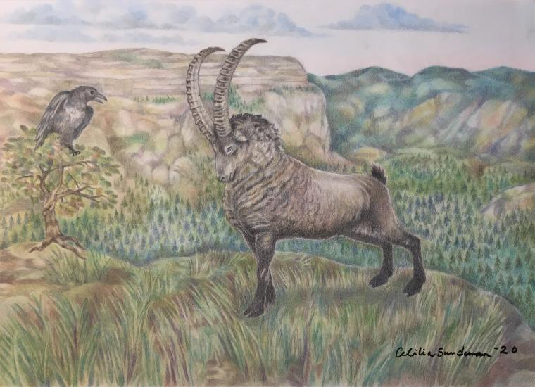 The Ibex and the raven