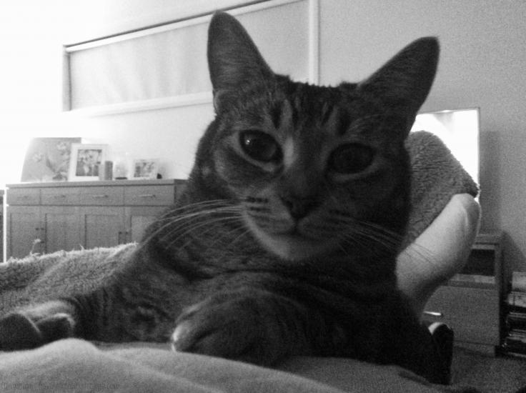 BW - CAT