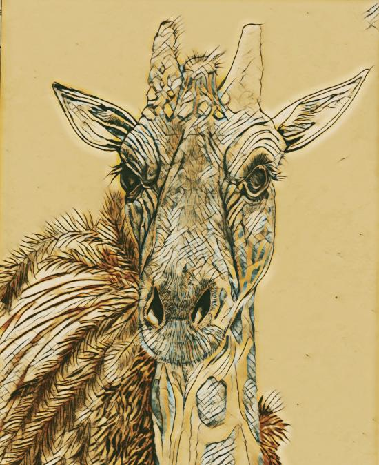 GIRAFFE DRAWING