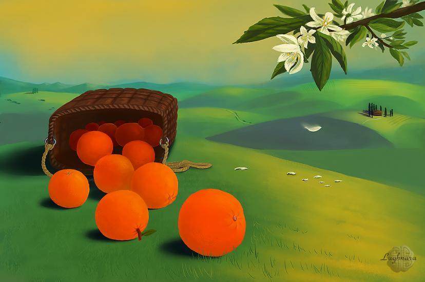 Toscana's oranges