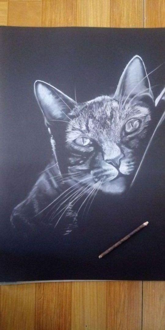 White black cat