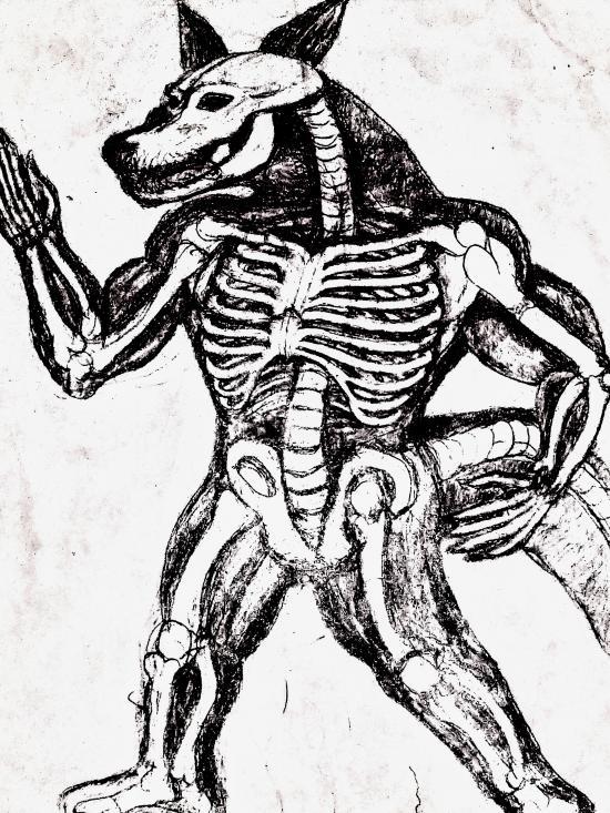 Anthro skeleton 2