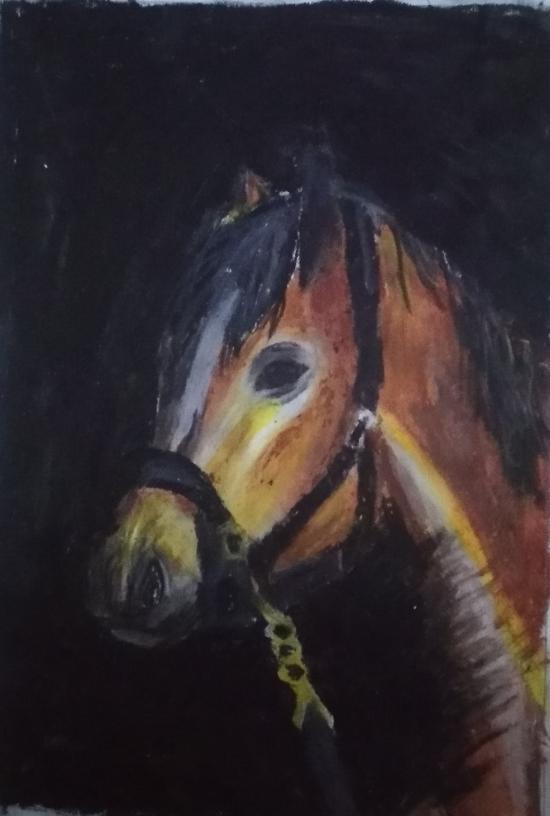 Horse by 13yrs old boy