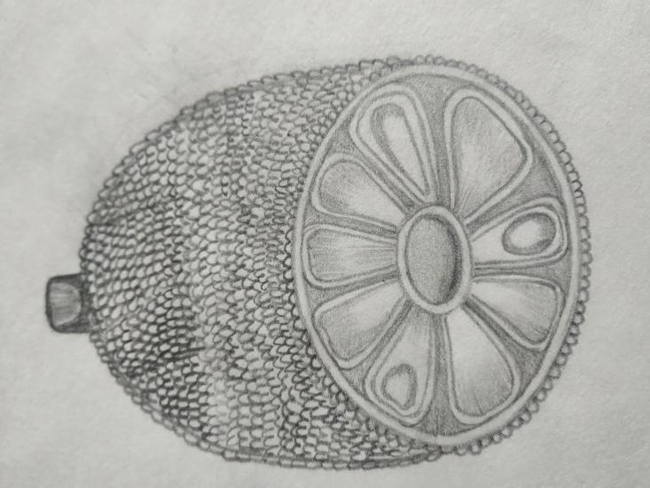 realistic drawing of jackfruit