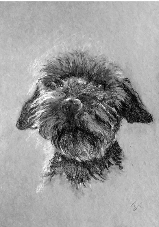 jims-dog