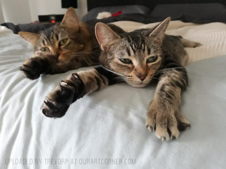 CHILLED CATS