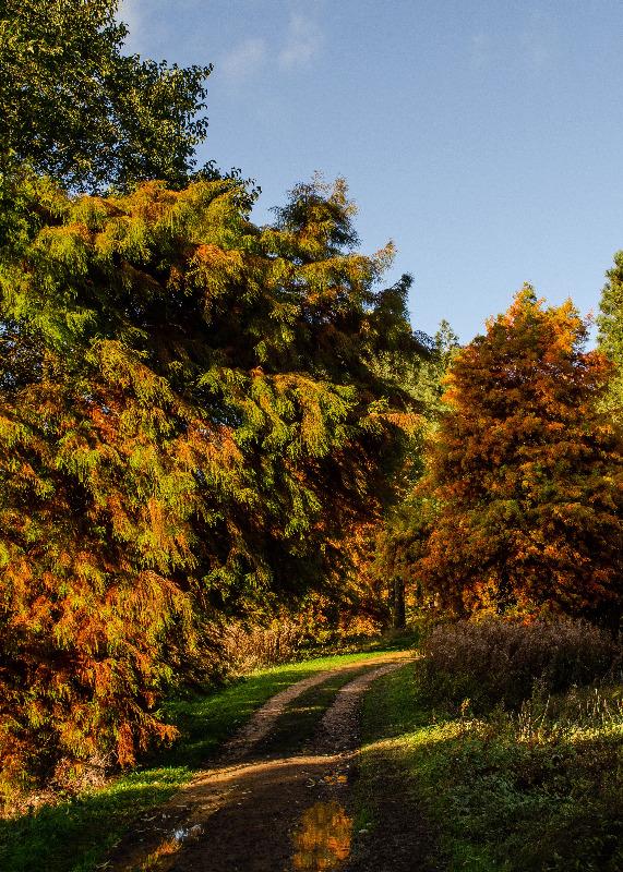 © The Yorkshire Arboretum