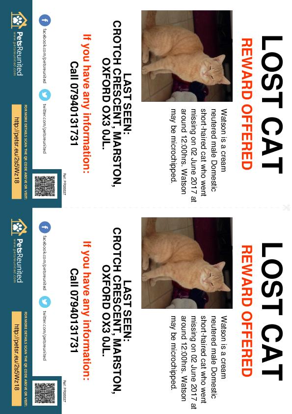 Lost pet flyers - Lost cat: Cream cat called Watson