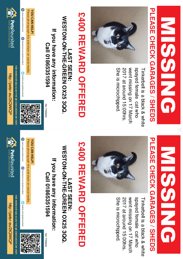 Lost pet flyers - Lost cat: Black & white cat called Tinkerbell