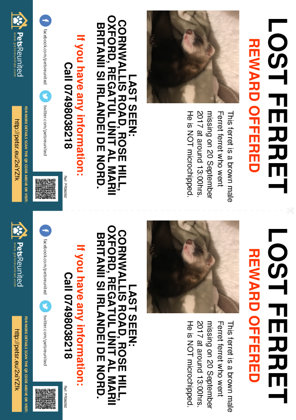 Lost pet flyers - Lost ferret: Brown  ferret [name witheld]